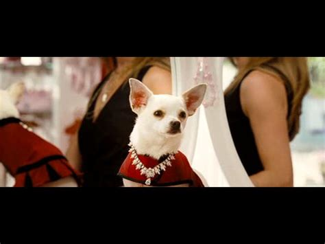 Beverly Hills Chihuahua: Trailer #2 from Beverly Hills
