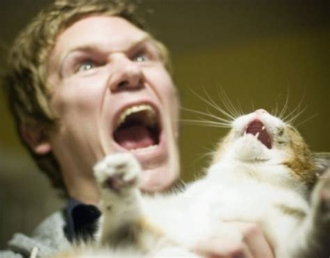 22 Pissed Off Cats - FunCage