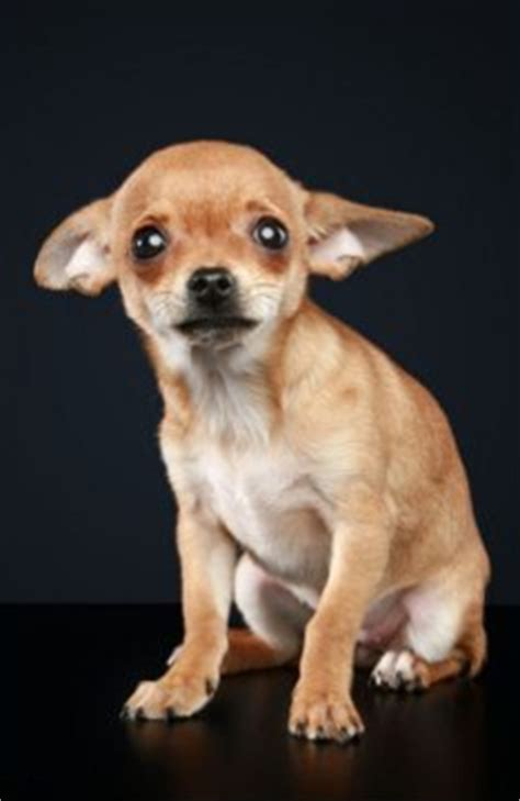 13 Dogs Who Are Really Concerned About Sequestration