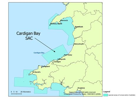 Cardigan Bay SAC | The Wildlife Trust of South and West Wales
